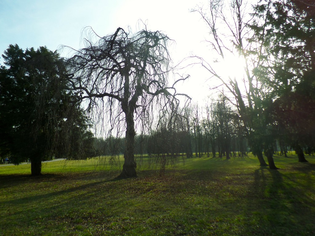 Bäume, Sonne, Wiese,..hach