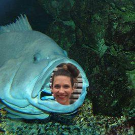 Schuhputzerfisch = ich!