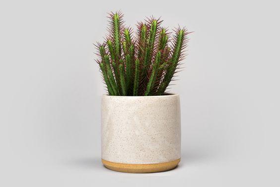 uebertopf-kaktus