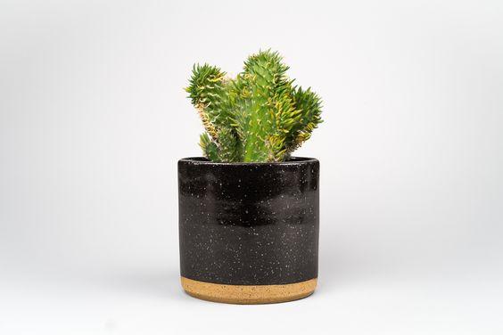 plant-succulent